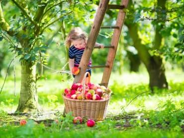 Sebze ve meyve tüketiminin önemi!